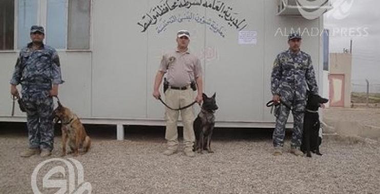 شرطة واسط تتسلم 20 كلبا بوليسياً وتنتظر وصول 70 آخرين