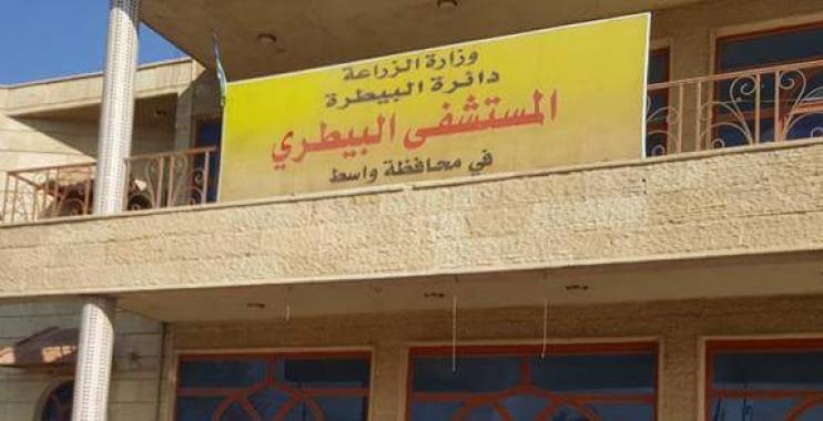 إصابة 2400 رأس من الاغنام والماعز بالحمى المالطية شمال واسط