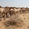 """""""الممنوعات الأمنية والتصحّر"""" يهددان البدو في واسط"""