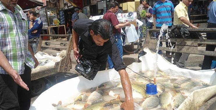 شرطة واسط تلقي القبض على عصابة لسرقة محال بيع الاسماك وسط الكوت