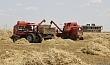 زراعة واسط تعلن عن مناقلة 10 الف طن من الحنطة الى النجف